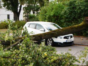 Arboristi - bīstamu koku novākšana
