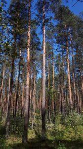 Inventarizācija mežā