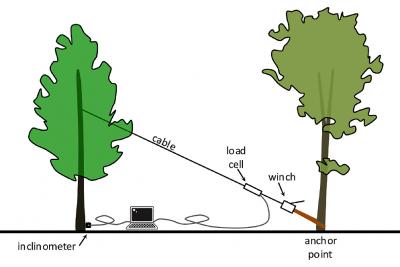 Koku vilkšanas tests