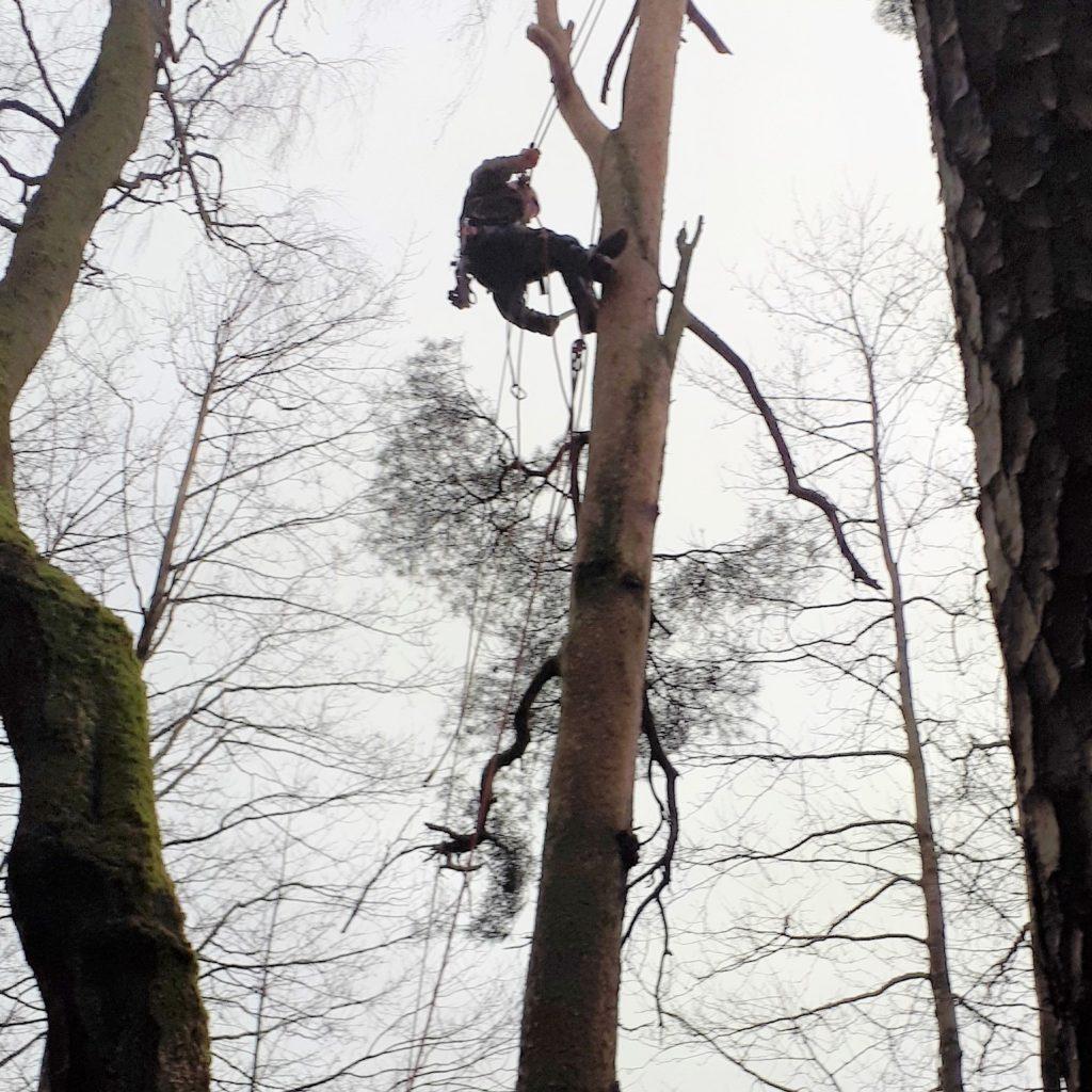 Arborists kokkopis
