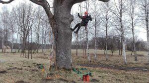 арборист услуги. пилитъ опасних деревев