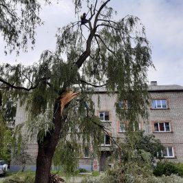 Koku vainagu zāģēšana